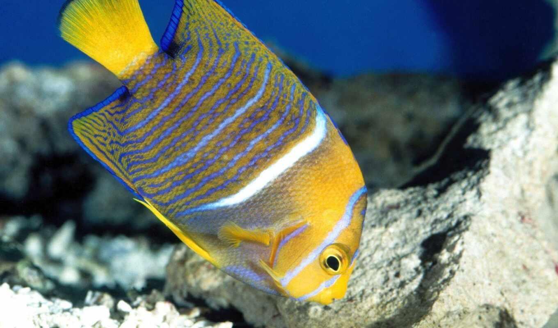 миро, underwater, fish, pece, фото, colore, marine