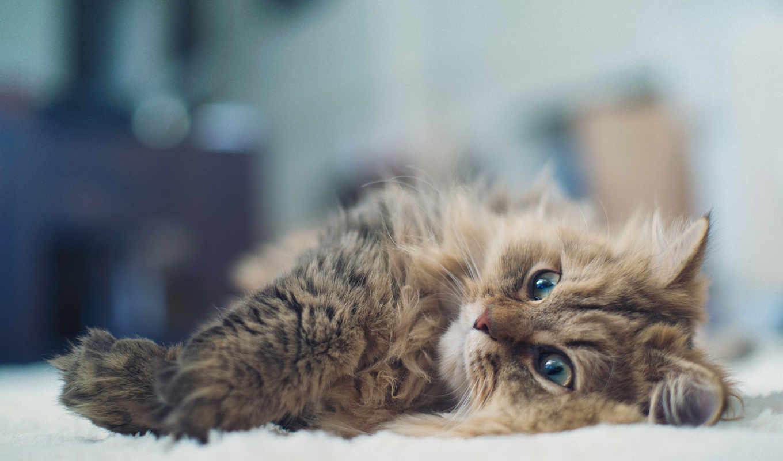 ben, animals, животные, cats, кошки, benjamin, картинка, daisy, кошка,
