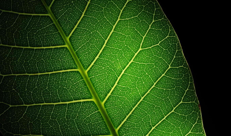 макро, emas, лист, зелёный, прожилки, audi, свет, дек, store,