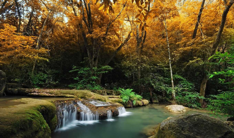 природа, лес, количество, осень, деревья, папоротник,