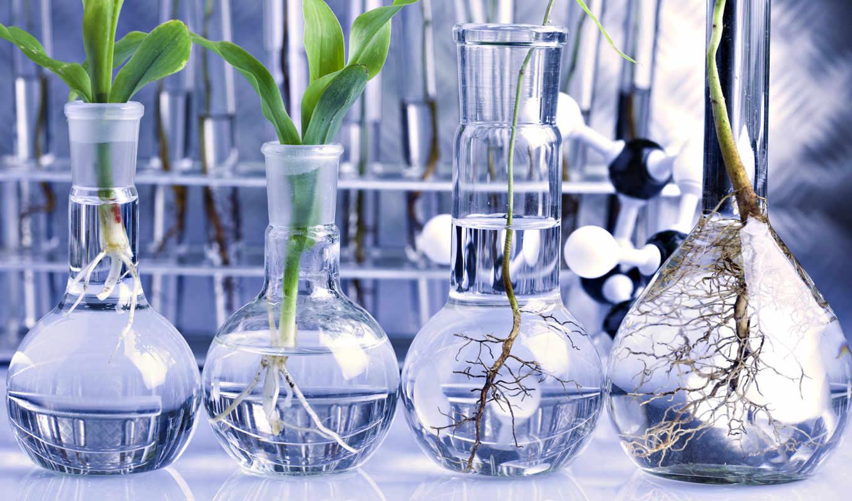 лаборатории, колбу, different, года, кассии, колба, растения, стеклянных,