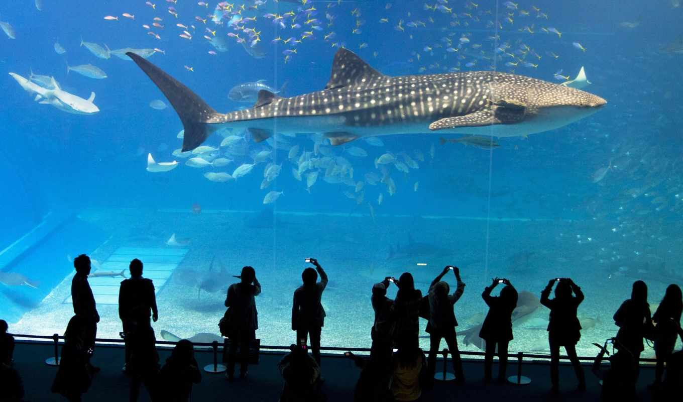 аквариум, акула, окинава, кит, япония, churaumi,
