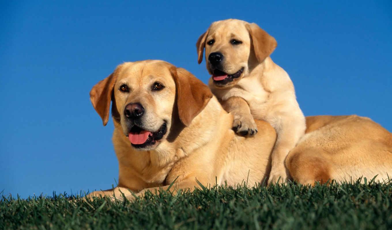собаки, взгляд, picture, save, as, разрешением, картинку, картинка, мыши, ней, скачивания, правой, кнопкой, выберите, предпросмотр, вышивки,