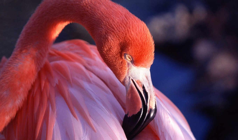 фламинго, розовый, под, автора, названием, представлена, вышивки, схема,