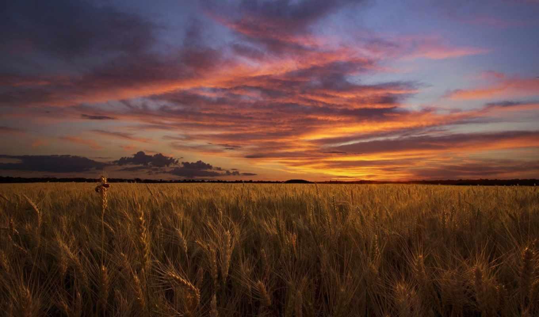 небо, summer, rye, поле, закат,