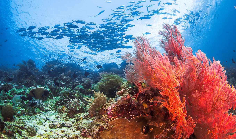 море, seabed, pisces, морское, bottom, каралы, природа, fish,