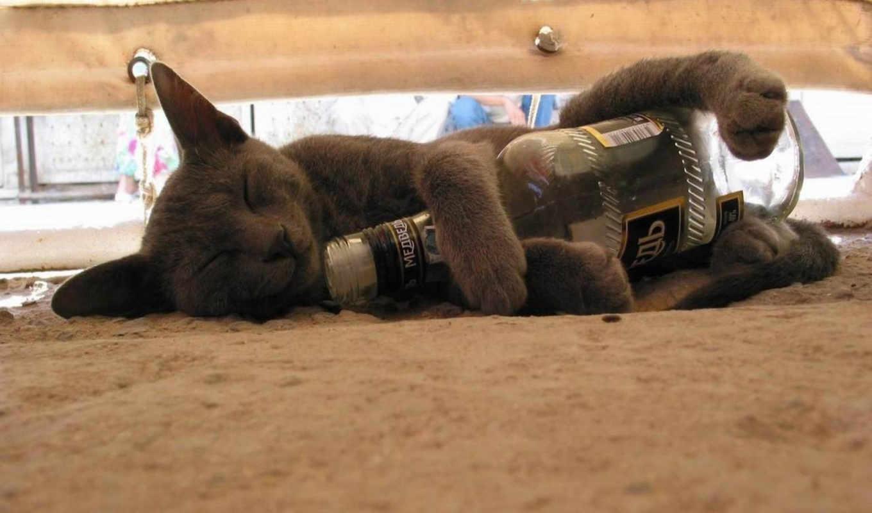 кот, бутылка, сон, ковёр