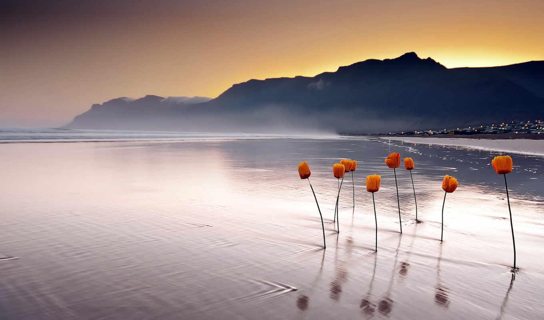 море, закат, landscape, цветы,