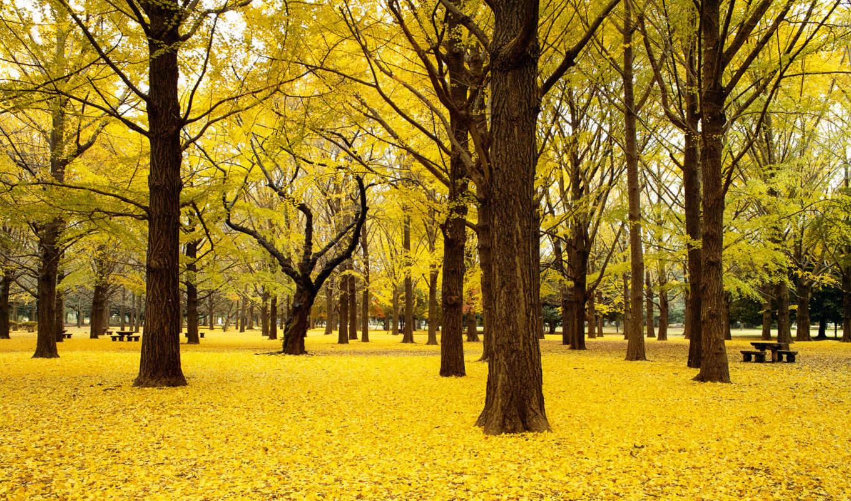 windows, осень, free, themes, park, trees, тема,