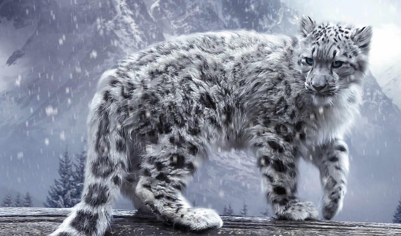 las, leopardo, nieves, leopardos, леопард, pantalla, снег, fondos,