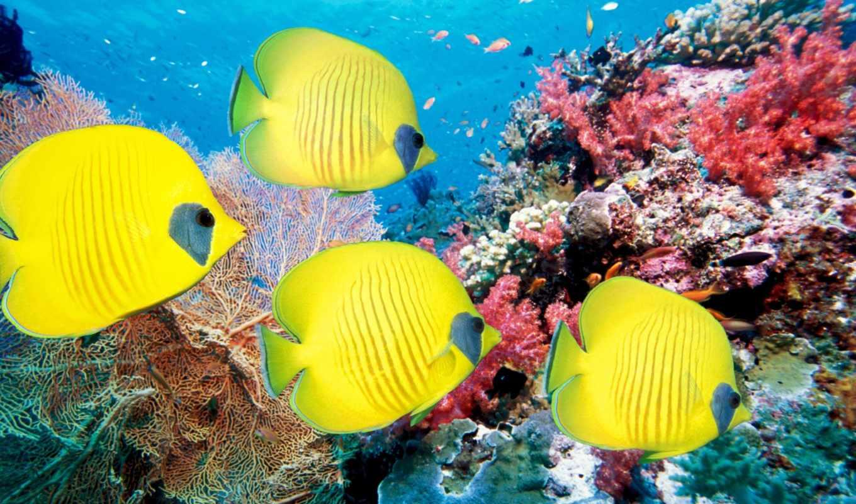 море, рыбки, кораллы, world, underwater, pisces,