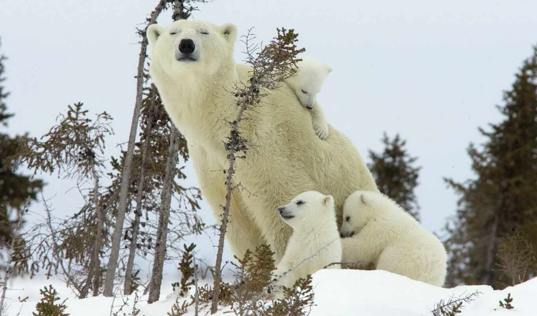 animal, медведь, wild, oir