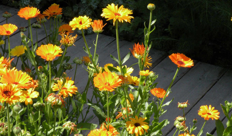 цветы, slike, весна, cveća, najlepše, изображение, природа, slice, картинку,