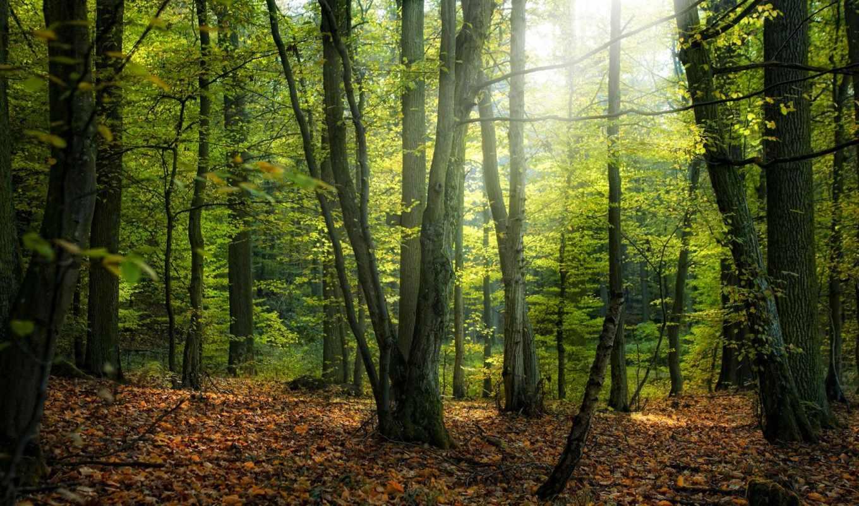 осень, деревя, листья, дерево, природа, park,