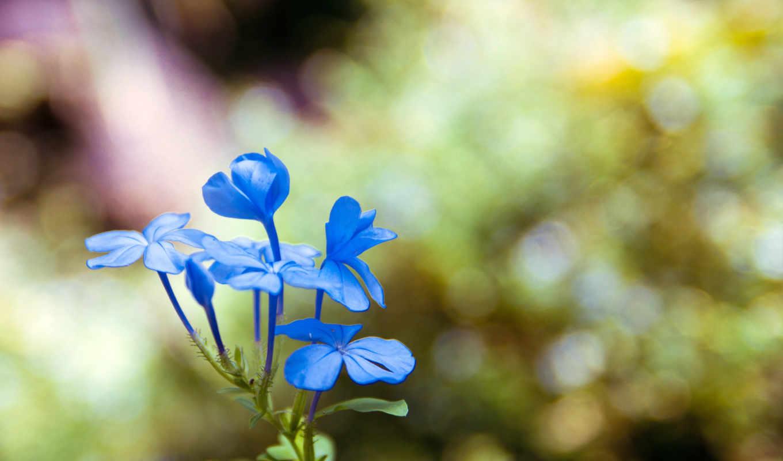 красивые, марта, макро, бабочки, стиле, букашки, подборка, вк, nibiru,