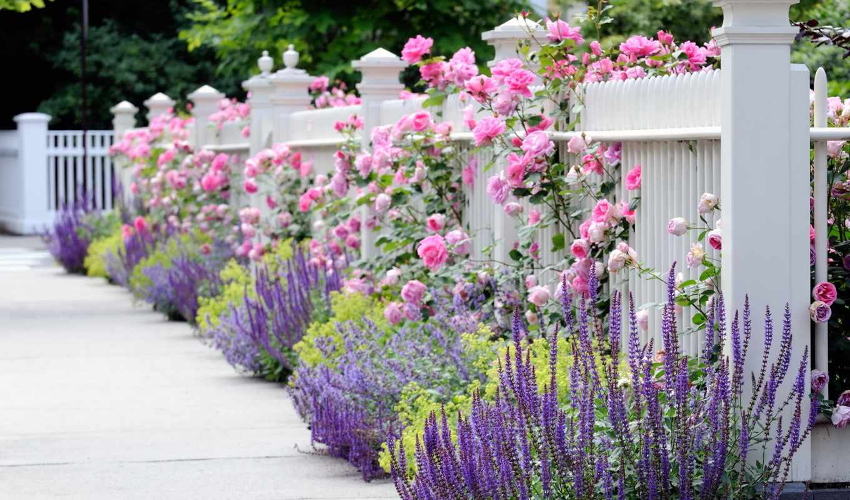 роз, опоры, розы, плетистых, roza, плетистая,