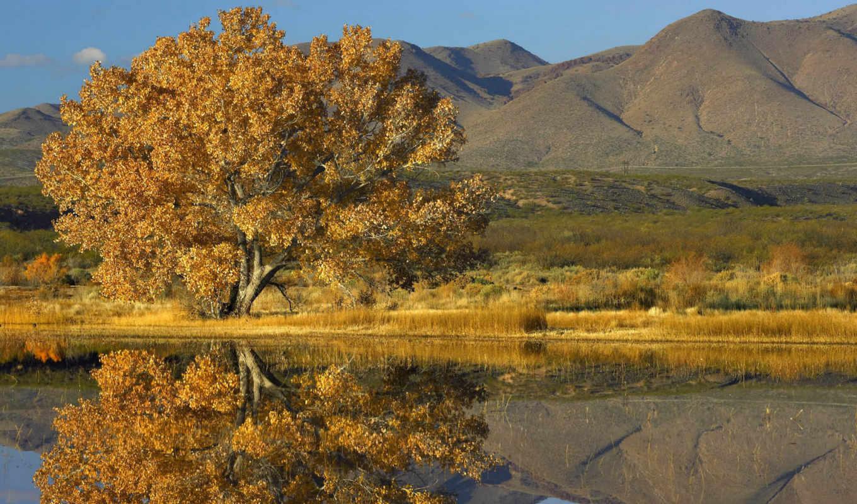 пейзажи, дерево, landscape, отражение, озеро, water, осень, красивые, горы,