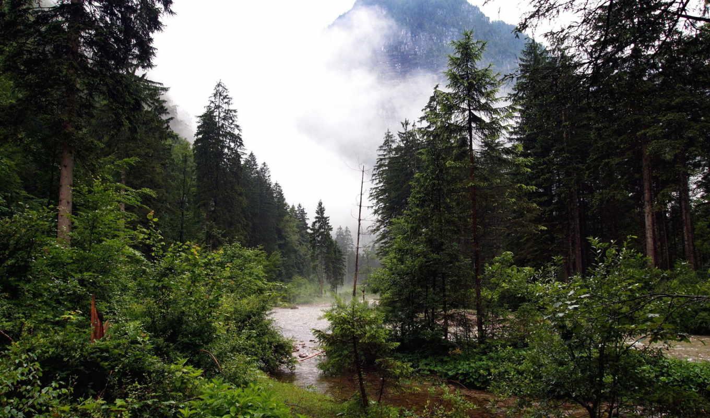 лес, природа, река, гора, туман, ручей, browse,