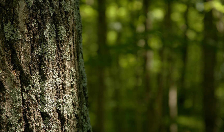 дерево, кора, лето, лес, природа, wallpaper, ствол, wallpapers, дерева, tree,