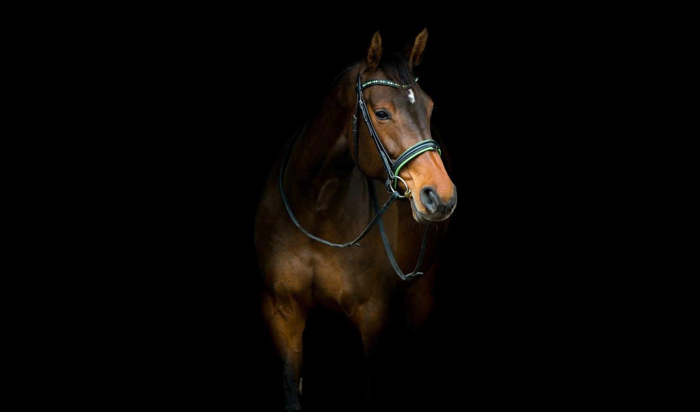 лошадь, планшет, конь,