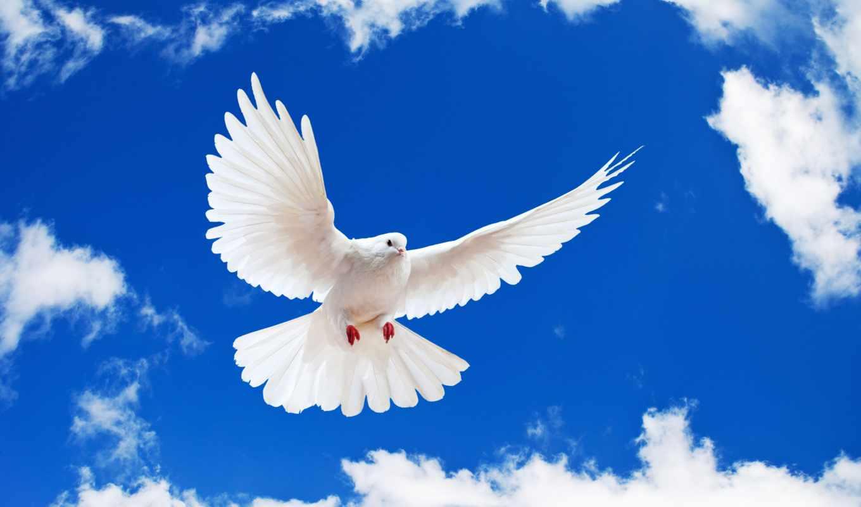 красивые, zhivotnye, природы, птицы, летние, пейзажи -, страница, фотографий, голуби,