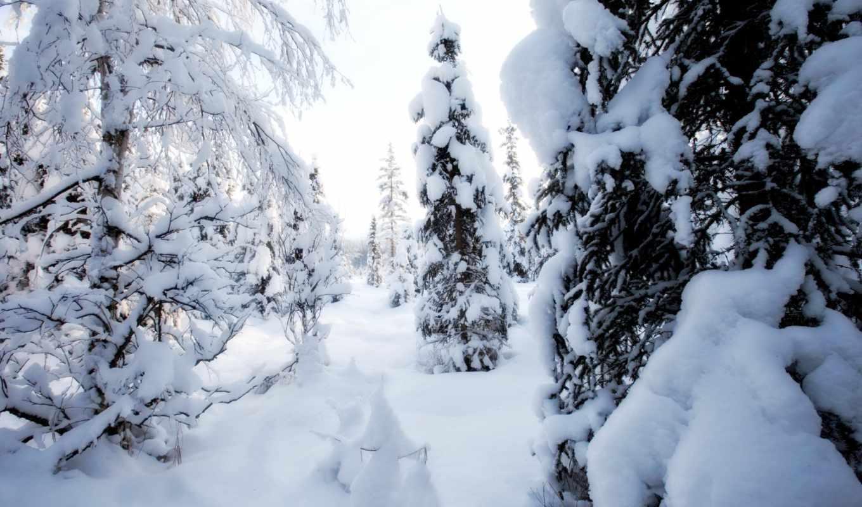 con, winter, imágenes, para, desierto,