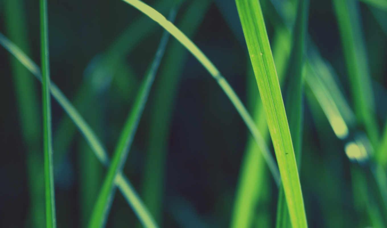 трава, макро, eyes, wallnest, closeup, women,