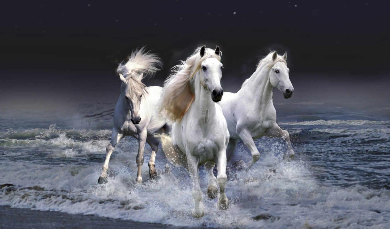 кони, привередливые, высоцкий, рекою, со, водопою, ходют,
