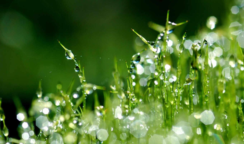 трава, роса, капли, макро, газон, росы,