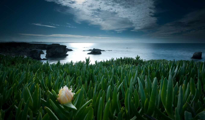 цветок, одинокий, priroda, где, лесу,