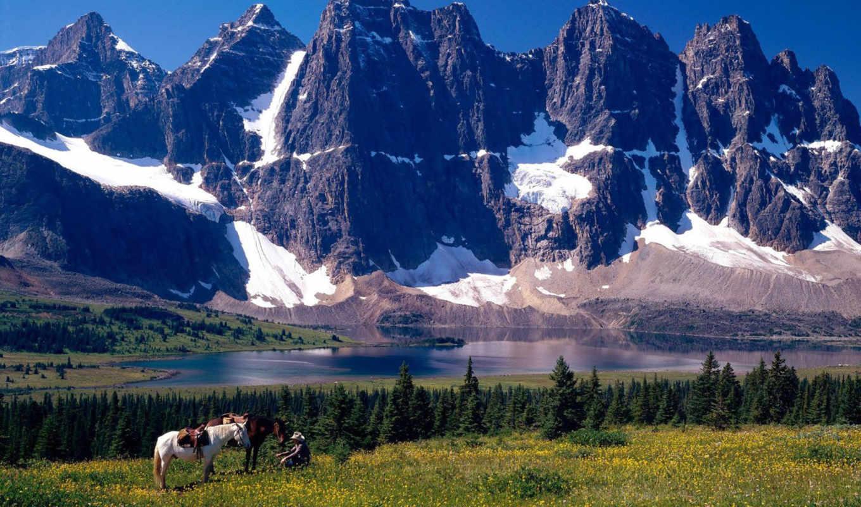 park, альберта, горы, jasper, канада, деревя,