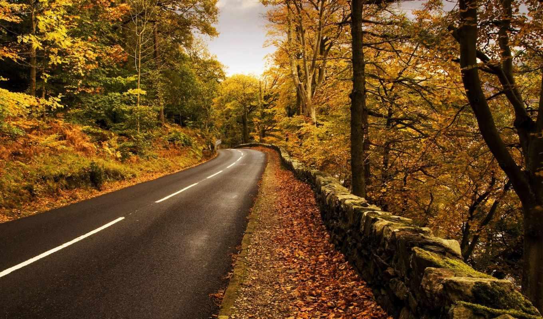 дорога, осень, природа, разметка, лес, trees,