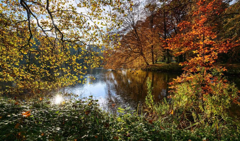 bajo, naturaleza, осень, park, дерево, pa-se, лист, rbole, пруд, branch, holanda