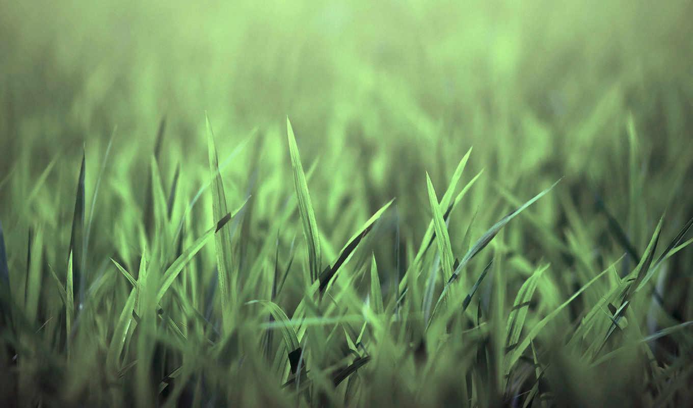 трава, зелёная, природа, картинка,