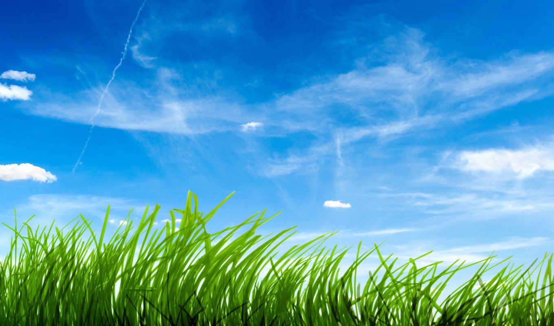 трава, зелёная, небо, траве, голубое, зеленой, качества, высокого,