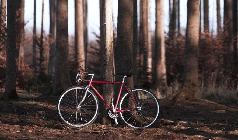 велосипед, лес, велосипедист, standard, federation, european, bike, car, лицо, black
