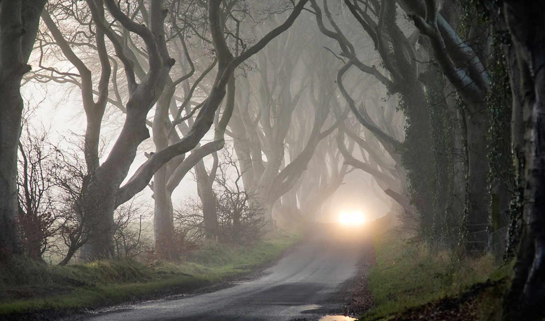 фары, деревья, туман, таинственность, осень, мрак, картинка,