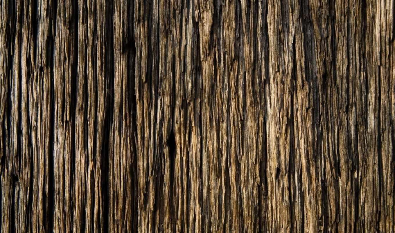 текстура, текстуры, дерева, коры, дерево, кора, цитатник,