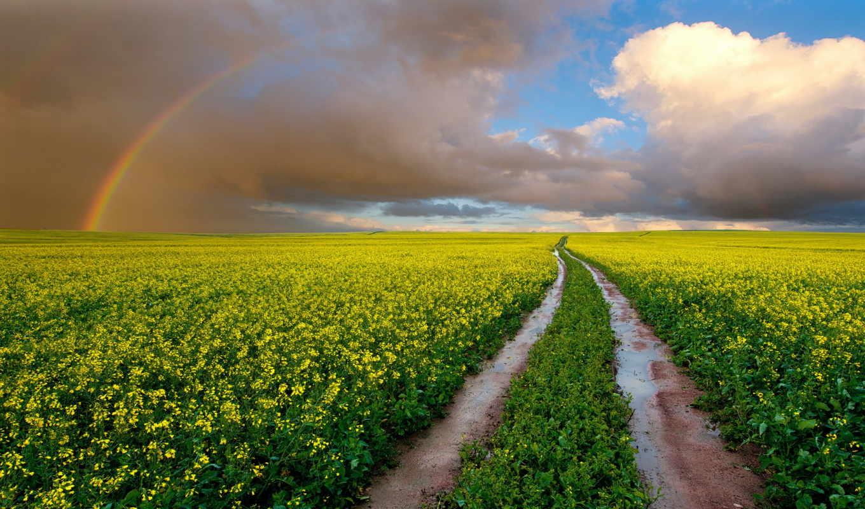 радуга, небо, дорога, margin, природа, oblaka, цветы, красивые, рапс,