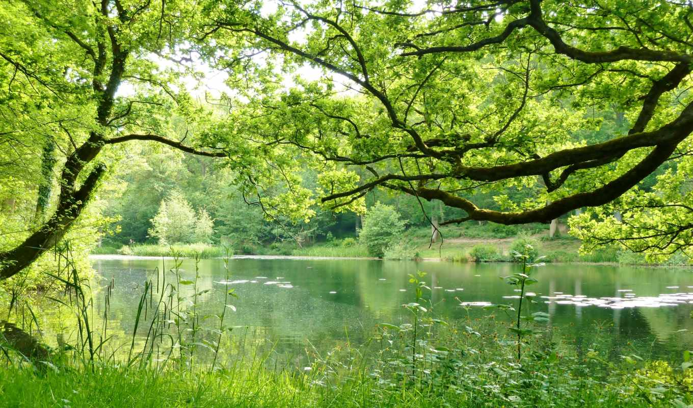 природы, природа, мм, размеры, лес,