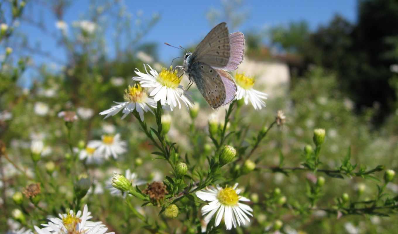 бабочка, flying, photography, photos, день, lepidoptera, заказать, насекомое, mainly, butterflies,