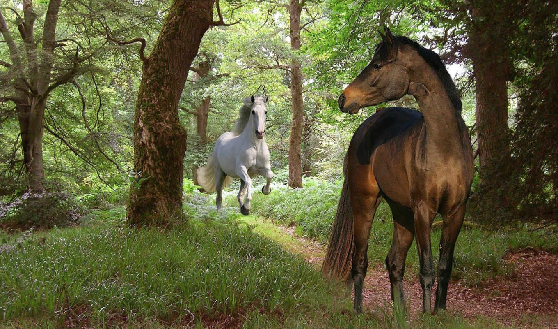 красивые, лошади, лошадь, zhivotnye, кони, лошадки, грациозные, бесконечно, мастей, всех, лошадей,
