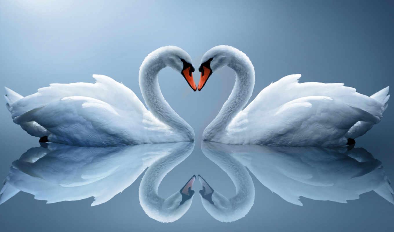 лебеди, отражение, сердце, пара, белые, love,