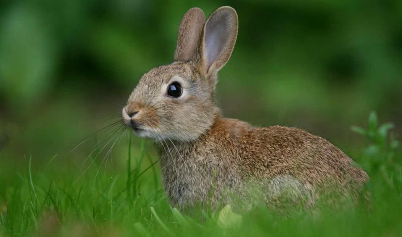 russia, кролик, животных, качестве, количество, смешные, лемуры, муравьями, дереве, заяц, картинку, зима, сидят, играясь,