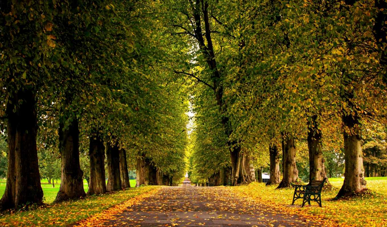 осень, park, ранняя, аллея, природа, листва, скамейка,