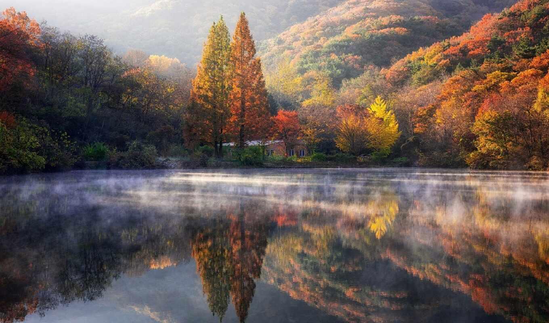 broadleaf, mix, лес, осень, şəkillər