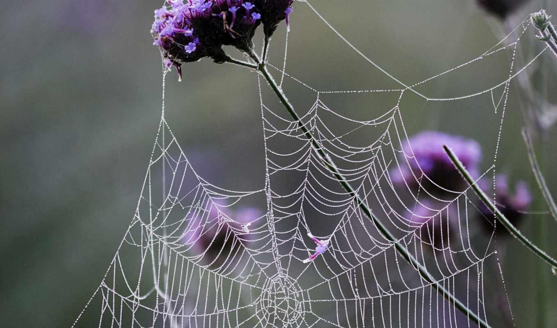 web, windows, downloads,