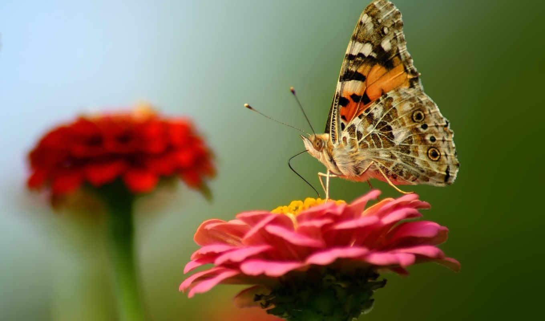 бабочка, những, цветы, loài, хоботок, разнообразный, сочный, микс, цветке, ngắm, nhất, bướm, đẹp,