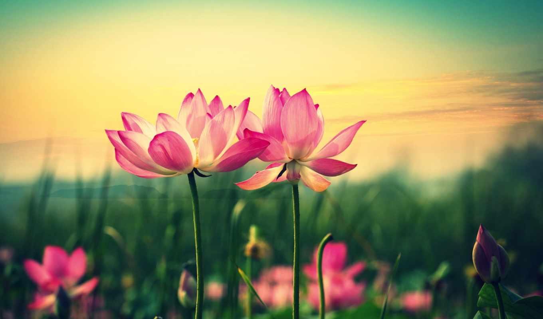 цветы, цвета, картинка, flowers, лепестки, стебель, листья, розовый,