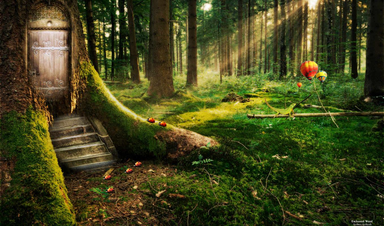 лес, enchanted,
